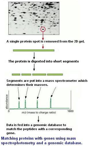 Tutorial Proteomics Page 6 Identifying Proteins