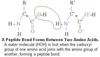 Tutorial Proteomics Page 2 Protein Structure